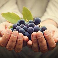 Ottima conservazione degli alimenti e dei vini
